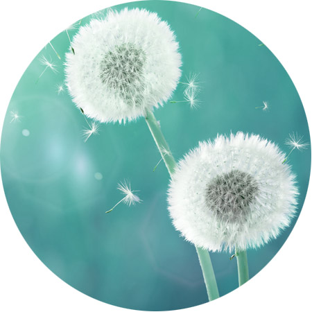 Allergy Medicine Icon